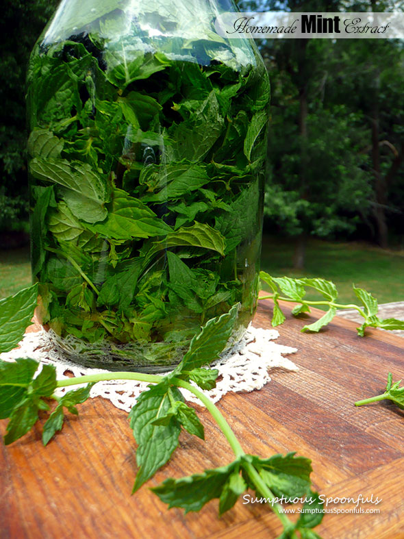 Homemade Mint Extract ~ Sumptuous Spoonfuls #DIY #mint #extract #recipe