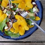 Stella de Oro Day Lily Salad wtih Cucumber, Pecans and 2 Cheeses