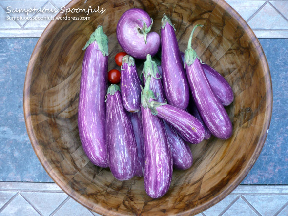 Purple eggplant for the Tomato Eggplant Ricotta Tart